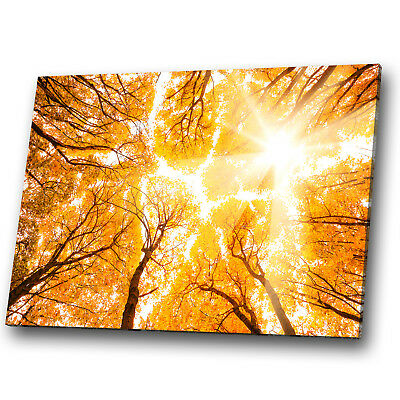 Nature Trees Yellow Orange Leaves Landscape Canvas Wall Art Large Picture Prints