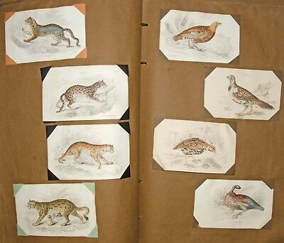Antique William Lizars (1788-1859) Hand Coloured Engravings, Qty 237 In An Album