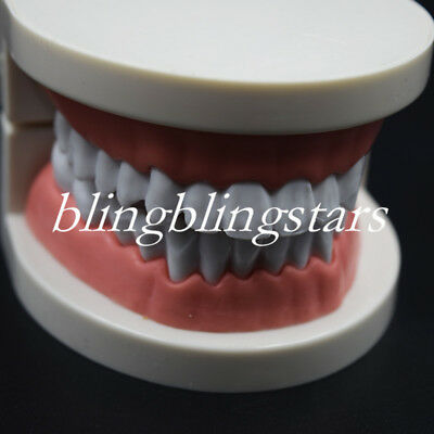 Dental Orthodontic Study Teach Adult Standard Typodont Demonstration Teeth Model