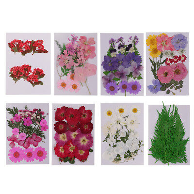 8pcs Mixed Pressed Dried Flowers Leaves for Scrapbooking Home Wedding Decors