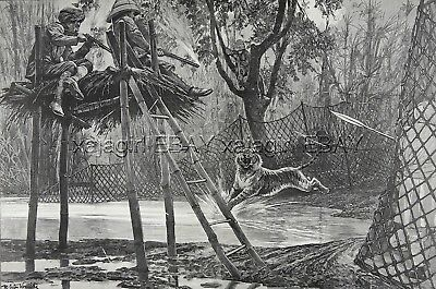 Tiger Hunting in Mysore Mysuru India, Huge Double-Folio 1890s Antique Print