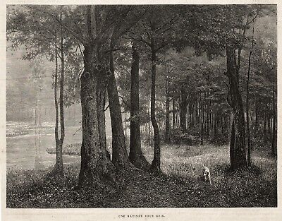 Dog English Pointer Hunting in Woods Misty Morning, Lovely 1880s Antique Print