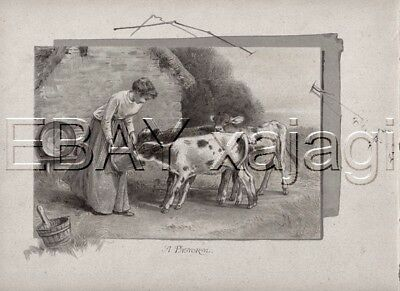 COW Calves Fed by Maiden, Beautiful High Quality 1880s Antique Print & Poem