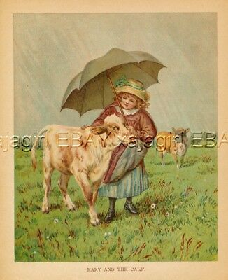 COW Calf & Girl Share Umbrella, LARGE c1890 Color Print