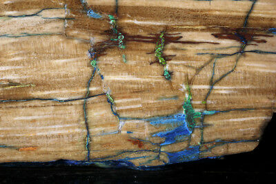 Rare Colla Wood slab - azurite and malachite in petrified wood