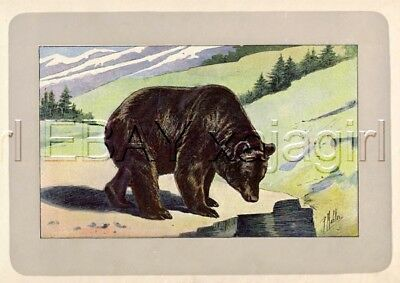 BEAR Grizzly or Black, Beautiful Rare Antique 100-Year-Old French Animal Print