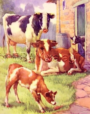 Cow & Calves, Dairy Cows 70-year-old CHILDREN's Print