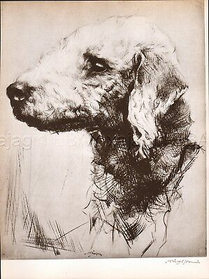 DOG Bedlington Terrier Exquisite Portrait, Beautiful 1930s Art Print