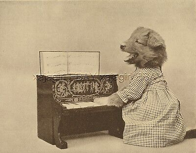 Dog Dressed Female Puppy Sings or Howls & Plays the Piano, Cute 1915 Print