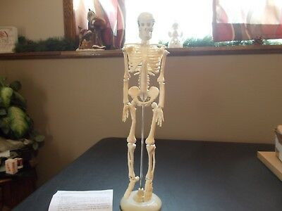 """18"""" Human Skeleton With Stand - New - Arms, Legs, Neck All Move"""