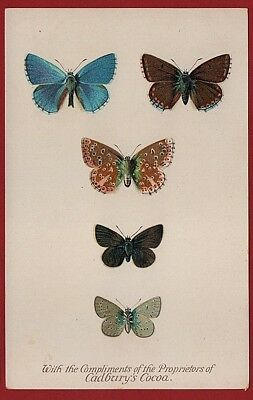 Cadbury's Cocoa Butterfly And Moth Reward Cards 1910  THE ADONIS BLUE BUTTERFLY