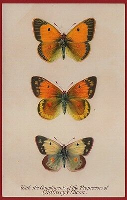 Cadbury's Cocoa Butterfly & Moth Reward Cards 1910  THE CLOUDED YELLOW BUTTERFLY