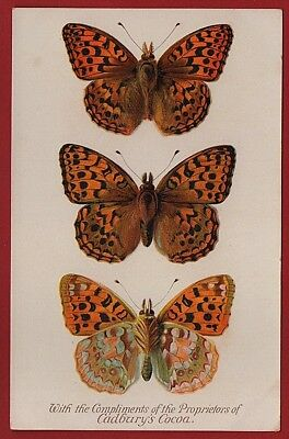 Cadbury's Cocoa Butterfly & Moth Reward Cards 1910  THE HIGH BROWN FRITILLARY