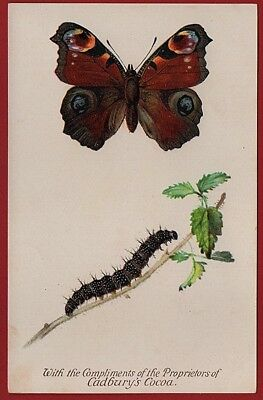 Cadbury's Cocoa Butterfly & Moth Reward Cards   1910    THE PEACOCK BUTTERFLY
