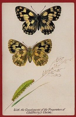 Cadbury's Cocoa Butterfly & Moth Reward Cards 1910   THE MARBLED WHITE BUTTERFLY