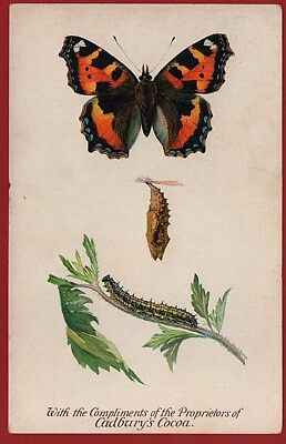 Cadbury's Cocoa Butterfly & Moth Reward Cards 1910   SMALL TORTOISE SHELL