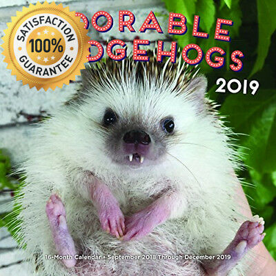 Adorable Hedgehogs 2019: 16-Month Calendar - September 2018 through December...