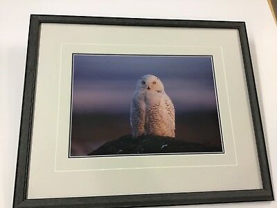 Thomas Mangelsen Limited Edition Signed Print Snowy Owl