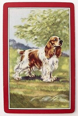 Vintage Swap/Playing Card - LOVELY SPANIEL DOG