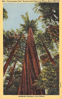 C0197 The Founders Tree Tallest Living Tree in Wold Redwood Hwy CA 1933 Linen PC