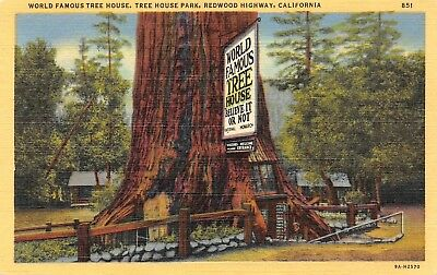 C0200 World Famous Tree House Lilley Redwood Park Redwood Hwy CA - 1939 Linen PC