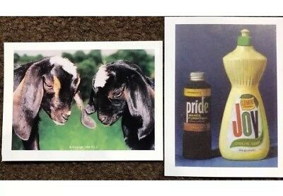 Pride & Joy Cards - Includes Two Cards and Instructions - This Is A Great Gag!