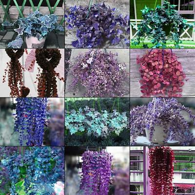 Rare Ivy Flower Seeds Garden Potted Air Purification for Wedding Party WT88 02