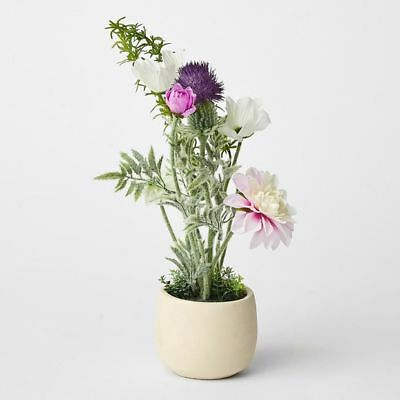 NEW Potted Wild Flowers