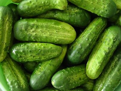 Homemade Pickles Cucumber Seeds, NON-GMO, Heirloom, Variety Sizes, FREE SHIPPING