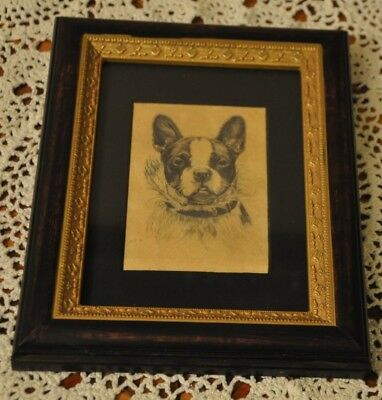 Boston Terrier Miniature Etching print Matted and Framed signed  M.E.H.