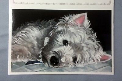 SALE! Westie original glossy sympathy greeting card set from my art painting