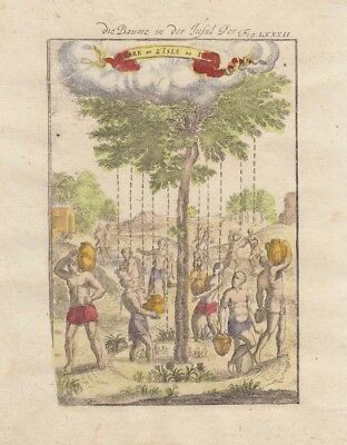 1685 Mallet Engraving of Weeping Tree, Canary Islands