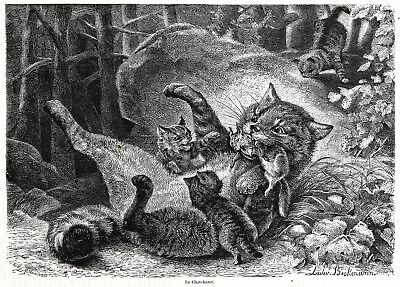 Cat Mother Brings Squirrel to Her Kittens, Large 1860s Antique Engraving Print