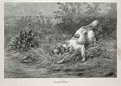 Dog English Setter or Red and White Setter Pointing Quail, 1880s Antique Print
