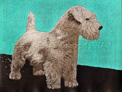 DOG Sealyham Terrier Ch. Named, Beautiful 1930s Art Print by D. H. Dakin