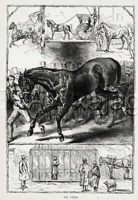 HORSE Sale (Carriage), HUGE 1880s Harrison Weir Print
