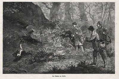 Ferret Polecat Trained to Hunt Rabbits for Hunters 1870s Antique Engraving Print