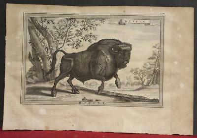 American Bison United States Canada 1773 Bellin/van Schley Unusual Antique Plate