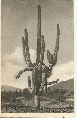Giant Cactus - Early Printed Photo Undivided Back PC