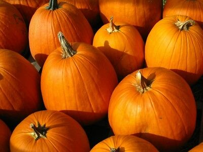 "Ornamental squash ""Halloween"" - the best for sculpting - 15 seeds"