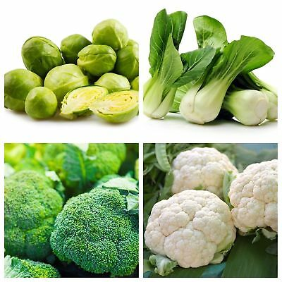 Vegetable Island 3- seeds of 4 vegetable species with high fibre content