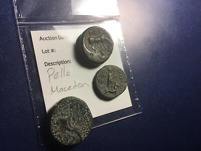 rare large lot of 3 scarce ancient greek paella-macedonia bull horn XF coins
