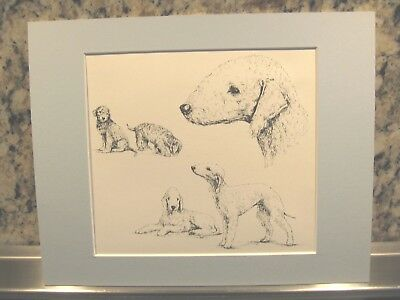 "Bedlington Terrier Print w/ Steel Blue Mat *  Matted to 8 x 10"" Ready to Frame!"