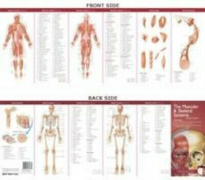 Anatomical Chart Company's Illustrated Pocket Anatomy: The Muscular & Skeletal