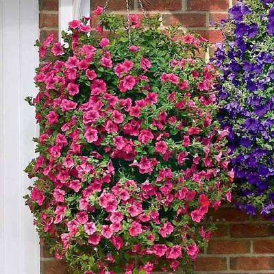 200PCS Mixed Colors Hanging Petunia Flower Seeds Balcony Bonsai-Calibrachoa New
