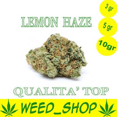 Cannabis LEMON HAZE Light INDOOR 100% Qualità TOP Light Cannabis 3gr 5gr 10gr