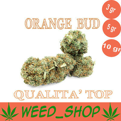 Cannabis ORANGE BUD Cannabis Weed Light 100% INDOOR Qualità TOP Light Cannabis