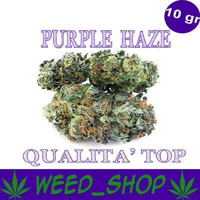 PURPLE HAZE 10g Light Cannabis Weed Light 100% INDOOR Qualità TOP Light Cannabis
