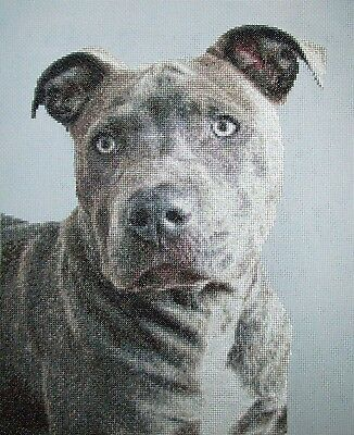 "Finished unframed Counted Cross Stitch Pitbull 11"" x14"""