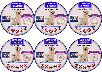 6 Pack Flea And Tick Collar For Dogs - 8 Months Protection - One Size Fits All